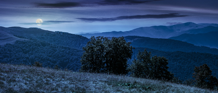 Photo for beautiful panorama of Carpathian mountains in early autumn weather. few beech tree tops behind the grassy slope of a ridge under sky with clouds at night in full moon light - Royalty Free Image