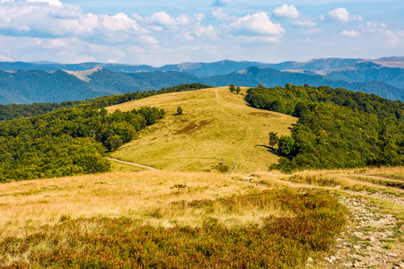 Photo for path through weathered grassy alpine meadow near the beech forest on top of a hill. gorgeous mountain ridge scenery on early autumn sunny day under the blue sky with clouds. - Royalty Free Image