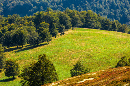 Photo for beech trees on hillside meadow. beautiful natural background in autumnal fine weather - Royalty Free Image