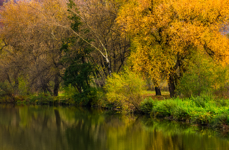 Photo for forest with yellow foliage near the river. gorgeous vivid autumn scenery reflecting in water surface - Royalty Free Image