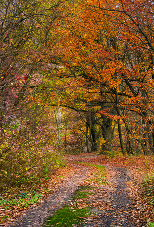 Photo for lovely autumnal scenery with dirt road in forest with reddish foliage - Royalty Free Image