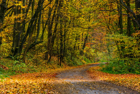 Photo for lovely autumnal scenery with asphalt road through forest in yellow foliage - Royalty Free Image