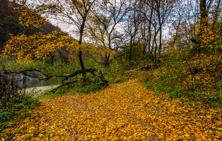 Photo for lovely autumnal scenery with yellow trees on rocky shore. river flows at the foot of a hill with rocky cliff - Royalty Free Image
