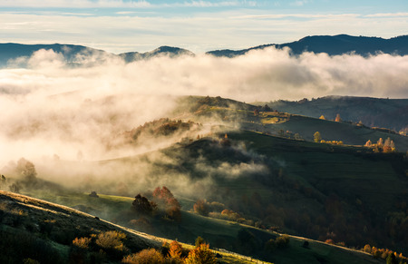 Photo for thick fog over the rolling hill in autumn. amazing mountainous countryside landscape at sunrise - Royalty Free Image