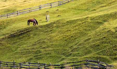 Photo pour horses grazing on a grassy hillside with wooden fences. lovely rural scenery in autumn - image libre de droit