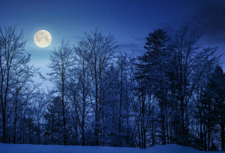 Foto de forest on snowy hillside at night in full moon light. beautiful nature background - Imagen libre de derechos