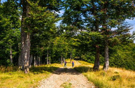 Photo for tourists on a dirt road through Primeval Beech Forests of the Carpathians. gorgeous nature scenery in summer - Royalty Free Image