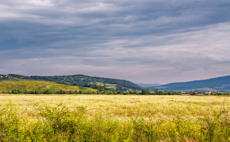 Photo for beautiful countryside landscape. rural field near the forest on a tranquil summer day. village on mountain ridge under cloudy blue sky - Royalty Free Image