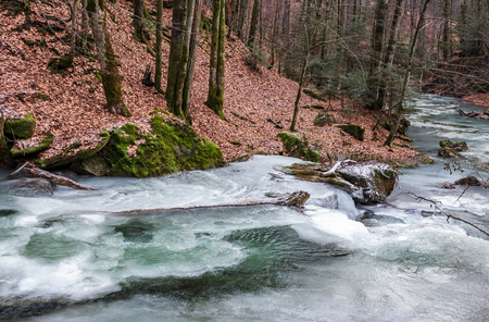 Photo for frozen river in forest with no snow. undefined nature condition - Royalty Free Image