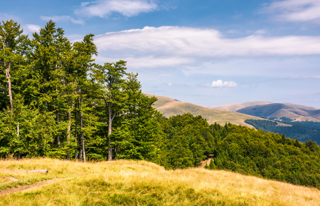 Photo for beech forests of Carpathian mountains. gorgeous landscape of Svydovets mountain ridge. beautiful nature scenery in late summer - Royalty Free Image