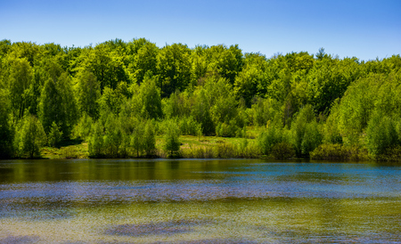Photo for forest on the lake shore. lovely nature scenery on a bright springtime day - Royalty Free Image