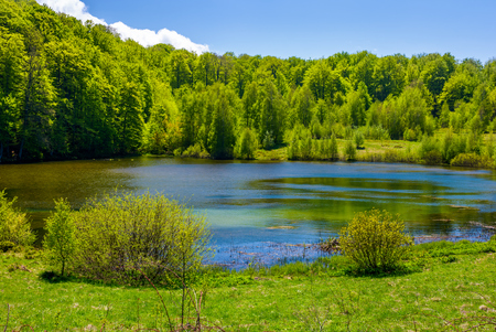 Photo for grassy shore of mountain lake among the forest. beautiful scenery in fine springtime weather - Royalty Free Image