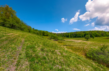 Photo for grassy glade on hill among the forest. lovely nature scenery under the clouds on a blue sky in springtime - Royalty Free Image