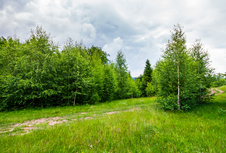 Photo for path through forested grassy meadow. beautiful summer nature scenery - Royalty Free Image
