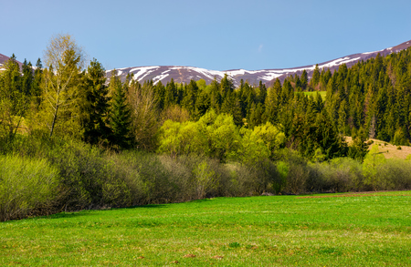 Photo for grassy meadow among the forest. lovely springtime nature in mountains - Royalty Free Image