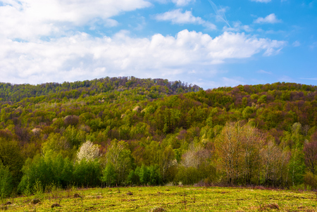 Photo for forested hillside on a fine weather. beautiful nature springtime scenery - Royalty Free Image