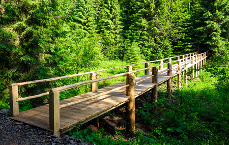 Photo for small wooden bridge among the forest. lovely nature scenery in summertime. location Synevyr National Park, Ukraine - Royalty Free Image