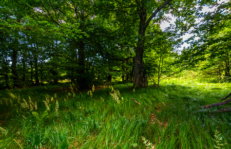 Photo for tall grass under the trees. lovely summer nature scenery - Royalty Free Image