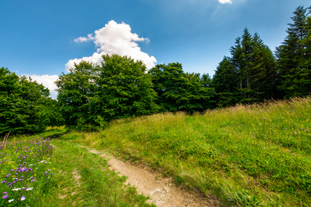 Photo for footpath trough the glade in forest. lovely summer nature scenery - Royalty Free Image