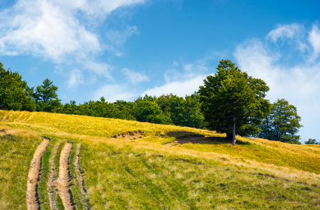 Photo for mountain road uphill along the forest. beech tree stand separately on the grassy meadow. lovely nature scenery in summer - Royalty Free Image