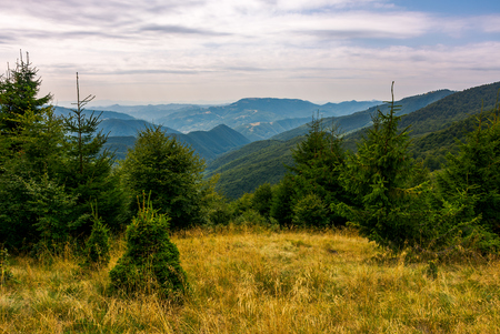 Photo for forest on a grassy meadow in mountains in evening. lovely summer landscape with Krasna mountain ridge in the distance under the cloudy sky - Royalty Free Image