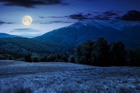 Photo for beech forest near Apetska mountain at night in full moon light. lovely summer landscape of Carpathian mountains - Royalty Free Image