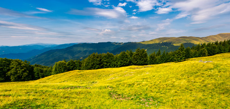Photo for gorgeous weather over grassy slopes of Carpathians. wonderful mountain landscape with beech forests on hillside in summer time. Location Svydovets mountain ridge, Ukraine - Royalty Free Image