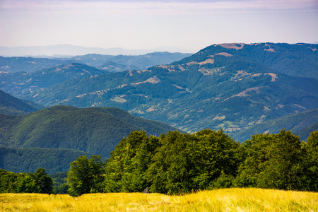 Photo for forested hills of Carpathian mountains. beautiful summer landscape. beech trees on a grassy hillside meadow. mountain ridge Krasna in the distance - Royalty Free Image