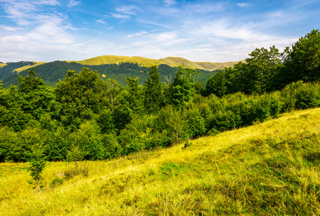 Photo for forested hills and meadows of Svydovets ridge. lovely summer landscape of Carpathian mountains in afternoon - Royalty Free Image