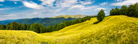 Photo for panorama of trees on the grassy hillside. Svydovets mountain ridge in the distance. beautiful summer afternoon nature scenery of Carpathian mountains, Ukraine - Royalty Free Image