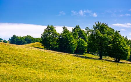 Photo for beech forest on grassy hillside. lovely scenery of Carpathian landscape in summer. location Svydovets ridge, Ukraine - Royalty Free Image