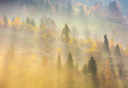Foto de fog over the forest in morning light. beautiful nature background. trees with yellow foliage on rolling hills in autumn. amazing atmosphere in Carpathian mountains - Imagen libre de derechos