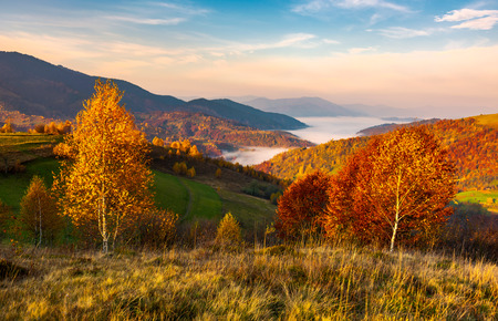 Photo for yellow trees on the edge of a hill in autumn. lovely mountain landscape with valley in fog under the gorgeous sky - Royalty Free Image