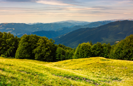 Photo for forest on a grassy meadow in mountains. beautiful summer landscape with Krasna mountain in the far distance under the blue sky with some clouds - Royalty Free Image