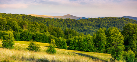 Photo for panorama of Forested Carpathian mountains. beech forest on the grassy meadow and mountain peak in the distance. wonderful atmosphere of summer evening - Royalty Free Image