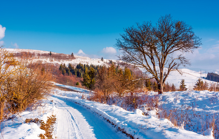 Photo for tree along the road through snowy hillside. lovely winter forenoon in mountains. spruce forest in the distance - Royalty Free Image