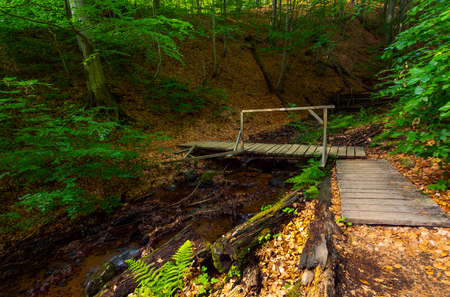 Photo for wooden bridge above the forest stream. lovely nature scenery in summer. beautiful ancient beech forest - Royalty Free Image
