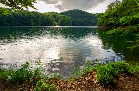Photo for Morske Oko lake among primeval beech forest . beautiful Vihorlat landscape of Slovakia in summer. - Royalty Free Image