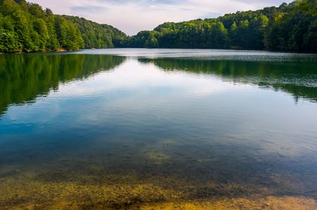 Photo for trout near the shore of wild lake. beautiful summer landscape. location Morske Oko lake of Slovakia. - Royalty Free Image