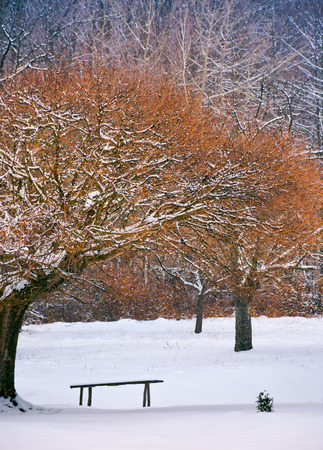 Photo for wooden bench under the trees in winter forest. lovely nature scenery - Royalty Free Image