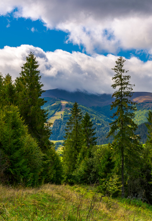 Photo for forested hills of Carpathian mountains. beautiful scenery on a cloudy day - Royalty Free Image