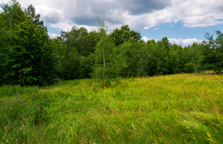 Photo for Large meadow among beech forest in summer. beautiful scenery on a cloudy and windy day - Royalty Free Image