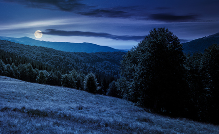 Photo for Meadow on the forested hill in summer mountain landscape at night in full moon light. beautiful nature scenery on high altitude - Royalty Free Image