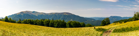 Photo for Beautiful panorama of summer landscape in mountain. beech forest on a grassy meadow. huge mountain in the far distance. - Royalty Free Image