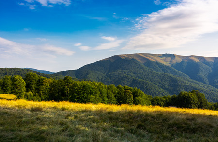Photo for grassy meadow and beech forest on hillside. Apetska mountain in the distance. lovely summer afternoon with some clouds on the blue sky - Royalty Free Image