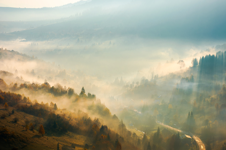 Photo for fog rise above the forest on hill. beautiful autumn scenery in mountain at sunrise - Royalty Free Image