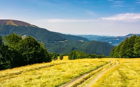 Photo for Country road down the alpine meadow . beautiful summer landscape in mountains - Royalty Free Image