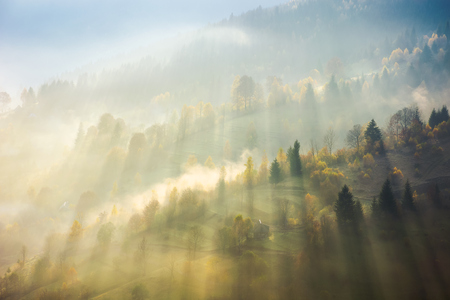 Photo for beautiful nature scene in fog. bursts of light come through haze among the trees down the hill. wonderful autumn atmosphere - Royalty Free Image