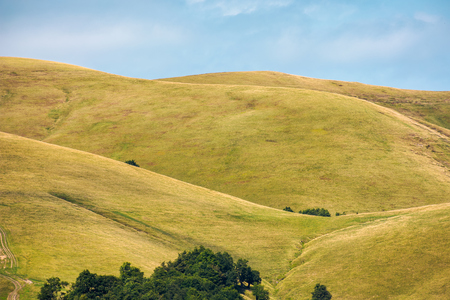 Photo for beech forest on rolling hills of mountain ridge. beautiful scenery with alpine meadows. wonderful nature background - Royalty Free Image
