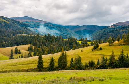 Photo pour overcast autumn day in mountains. grassy rolling hills with spruce trees. beautiful countryside landscape - image libre de droit